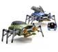 Сенсация! Жителей Луганщины одолевают неизвестные жуки.