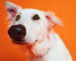 Ученые наконец выяснили, почему у собак мокрый нос  Фото с сайта www.podrobnosti.ua