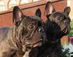 Определены место и время появления первых домашних собак