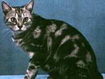 Ученые по математическим формулам объяснили появления узоров на шерсти диких кошек