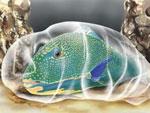 Тайна тропических рыб разгадана