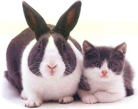 Мозг кролика успешно перенес заморозку и разморозку, нервные клетки при этом не были повреждены