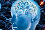 Зрелость мозга можно определить за 5 минут