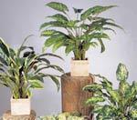 Растения выделяют парниковые газы из-за стрессовых условий