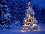 На Новый год в Украине мороз и небольшой снег   Фото с сайта zavarka.ru