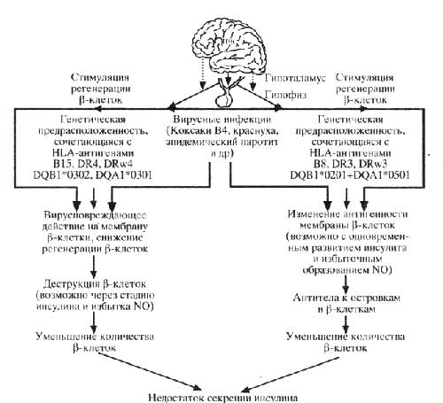 Механизмы патогенеза ИЗД