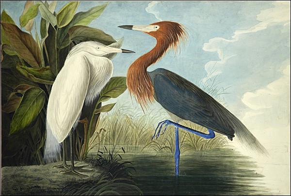 """Самая дорогая книга в мире: """"Birds of America"""""""