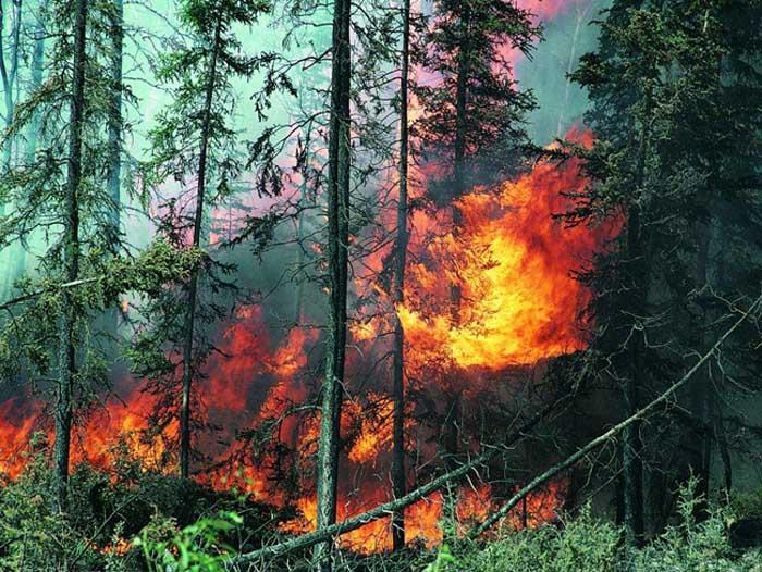 Ющенко взял на себя руководство пожарно-спасательными работами на Херсонщине