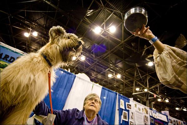 Бриар по кличке Кверид желает отведать вооон из той тарелочки. Getty Images / Afton Almaraz