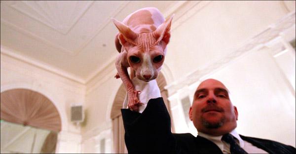 Джон Гардинер и его питомица породы сфинкс с почти литературной кличкой - Скарлет О'Харлесс. AP / Mary Altaffer