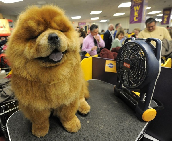 Выставка собак Westminster Kennel Club Dog Show 2010
