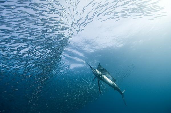 Лучшие подводные фотографии - 2010