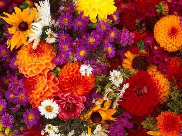 Цветы к 8 марта