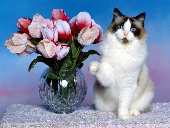 Истории про котов и кошек. Фото ваших любимцев.