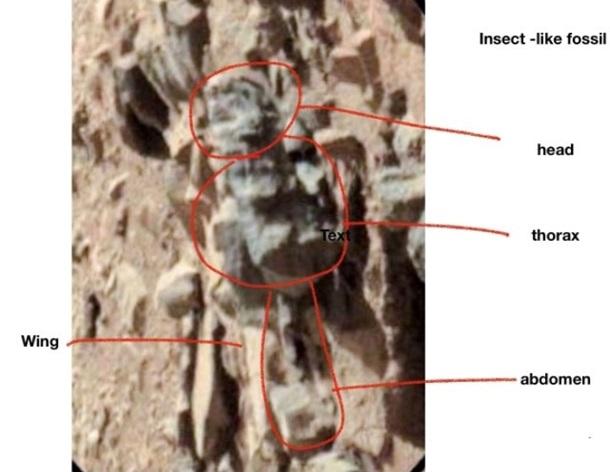 марсианские насекомые имеют крылья, панцири, усики