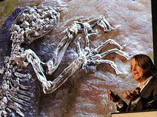 """Ученые нашли """"недостающее звено"""" между обезьяной и человеком  Фото timer-ua.com"""