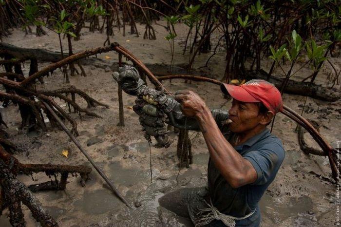 Охота на крабов по-бразильски